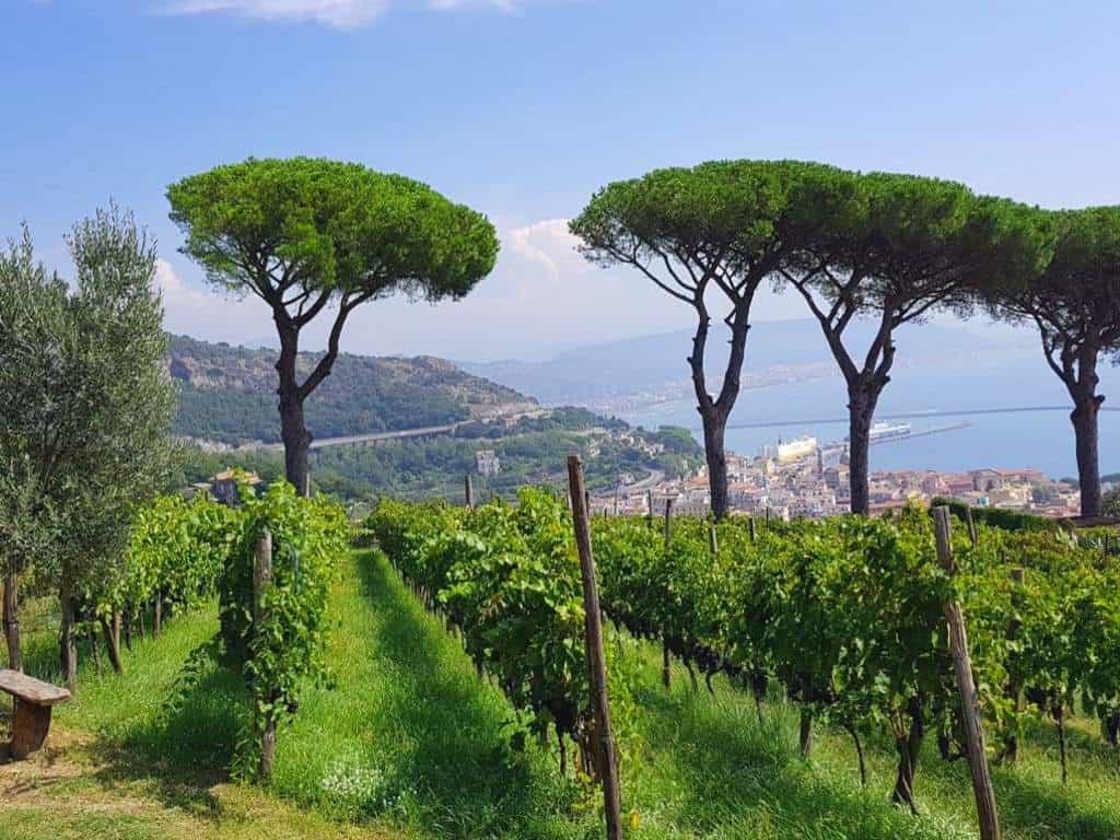 fantastischer blick vom weingut le vigne di raito auf die stadt salerno