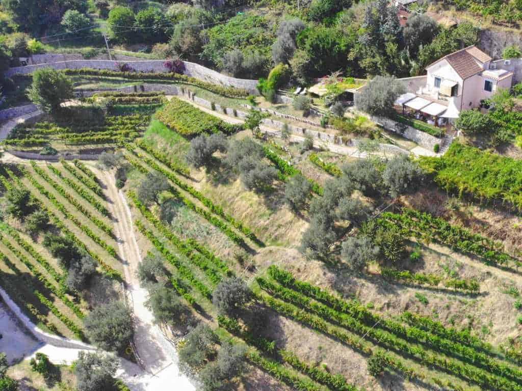 die terrassen vom weingut le vigne di raito an der amalfi kueste in italien