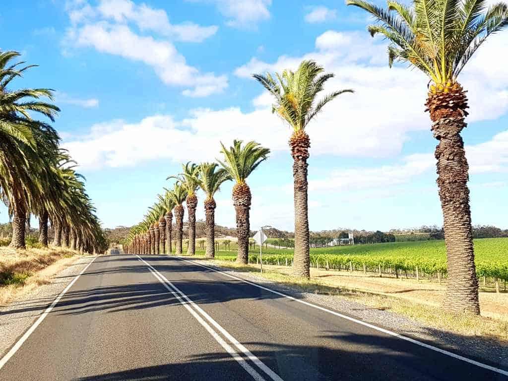 strasse in australien weinregion barossa valley mit palmen