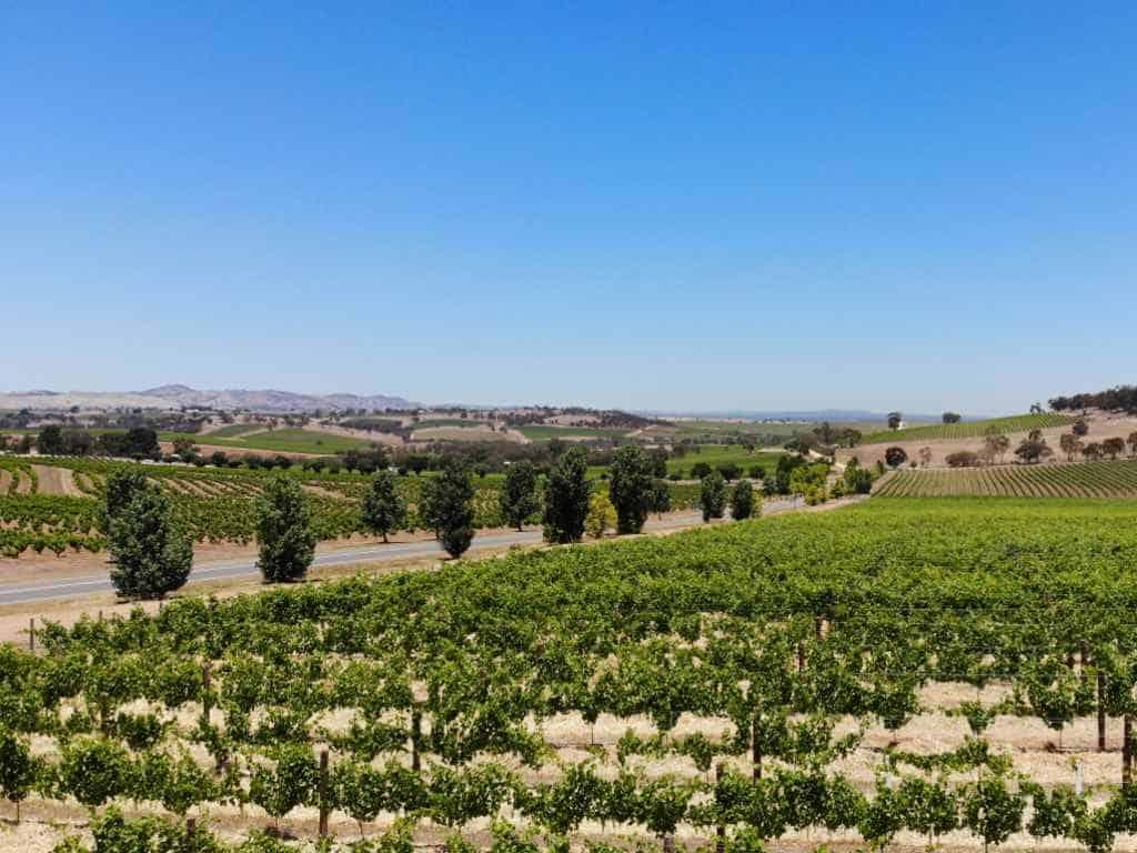 barossa valley blick auf weinberge und palmen
