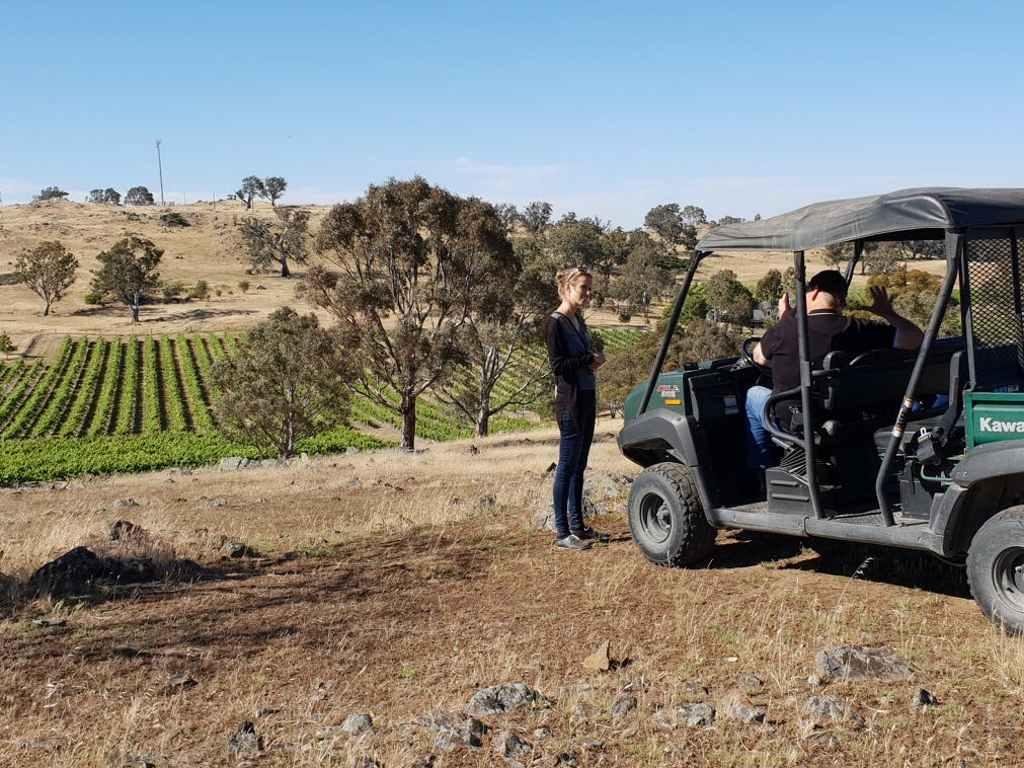 juliane bettinga mit trevor in einem buggy mit blick auf den brockenchack weinberg im eden valley