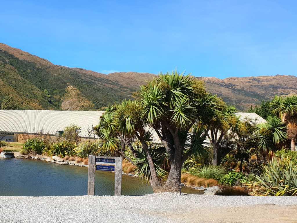 weingut mit palmen und vor bergen in central otago