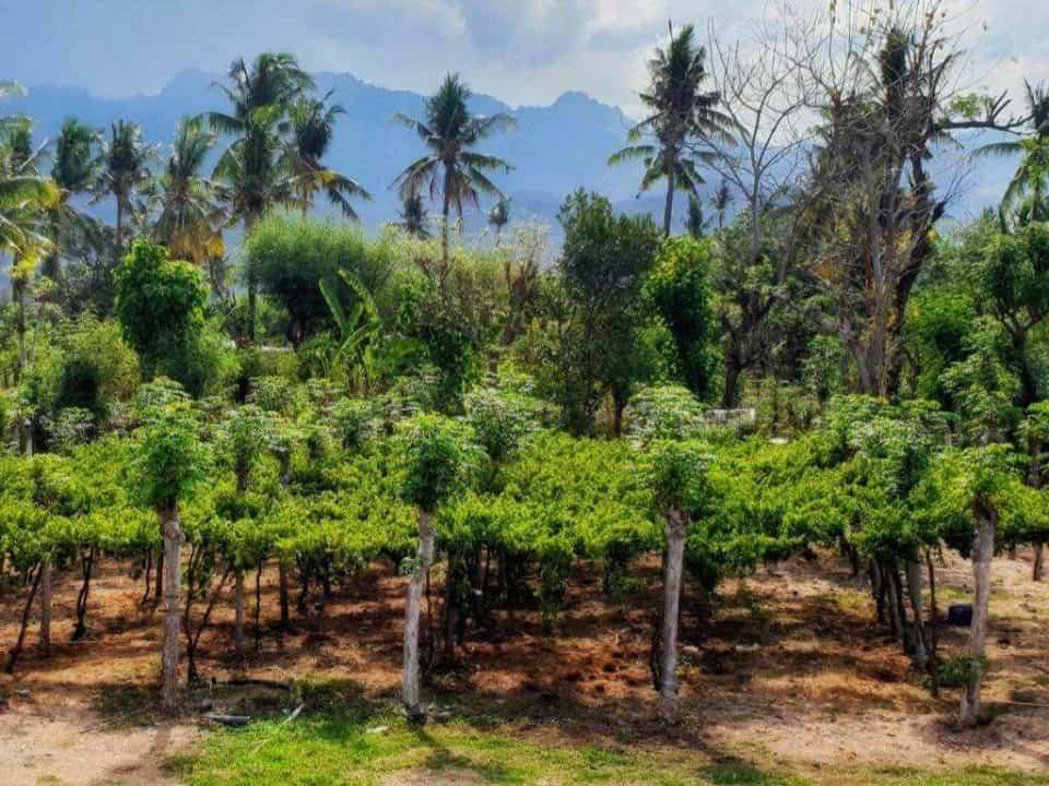 blick auf weinfelder mit palmen von hatten wines auf bali